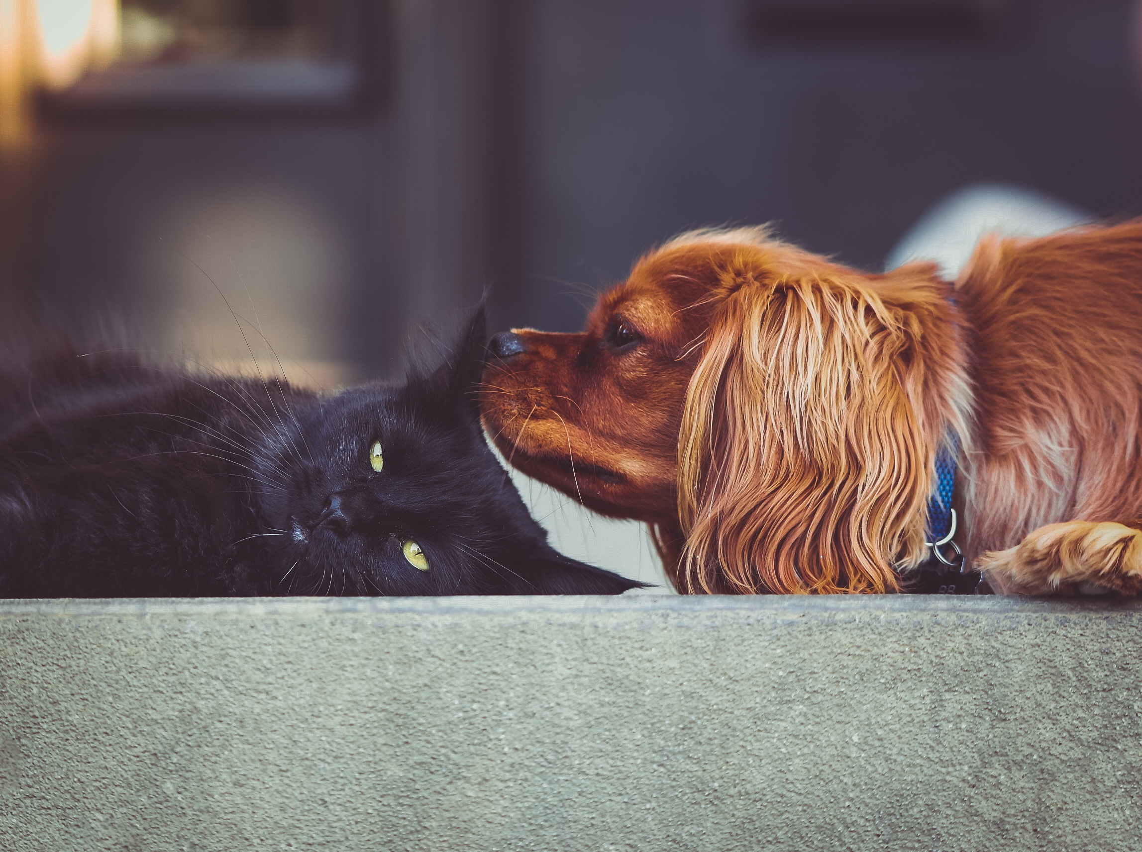 Managing Multi-pet Mealtimes