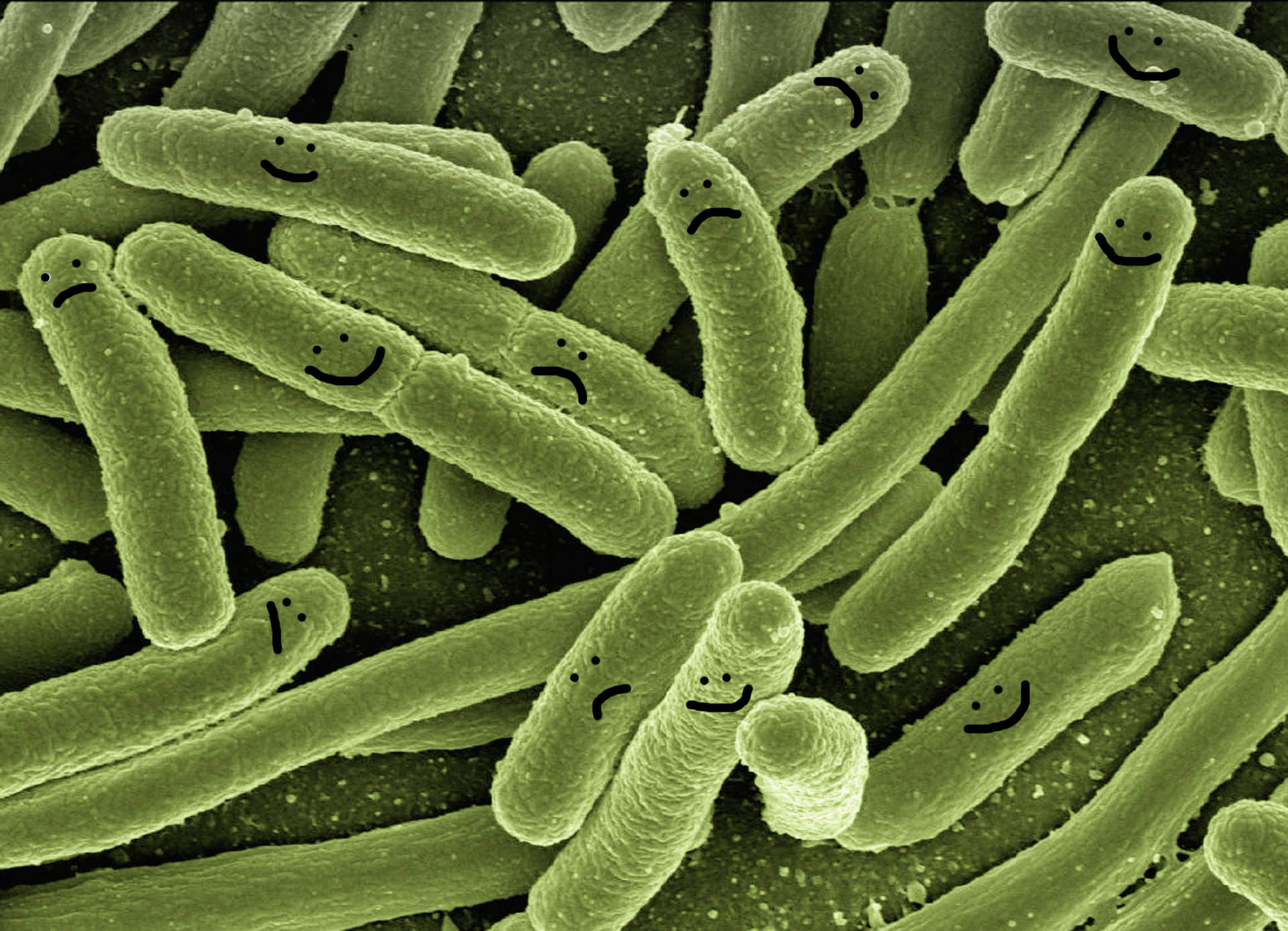 Good Bugs/Bad Bugs – The Confusing World of Probiotic Supplements