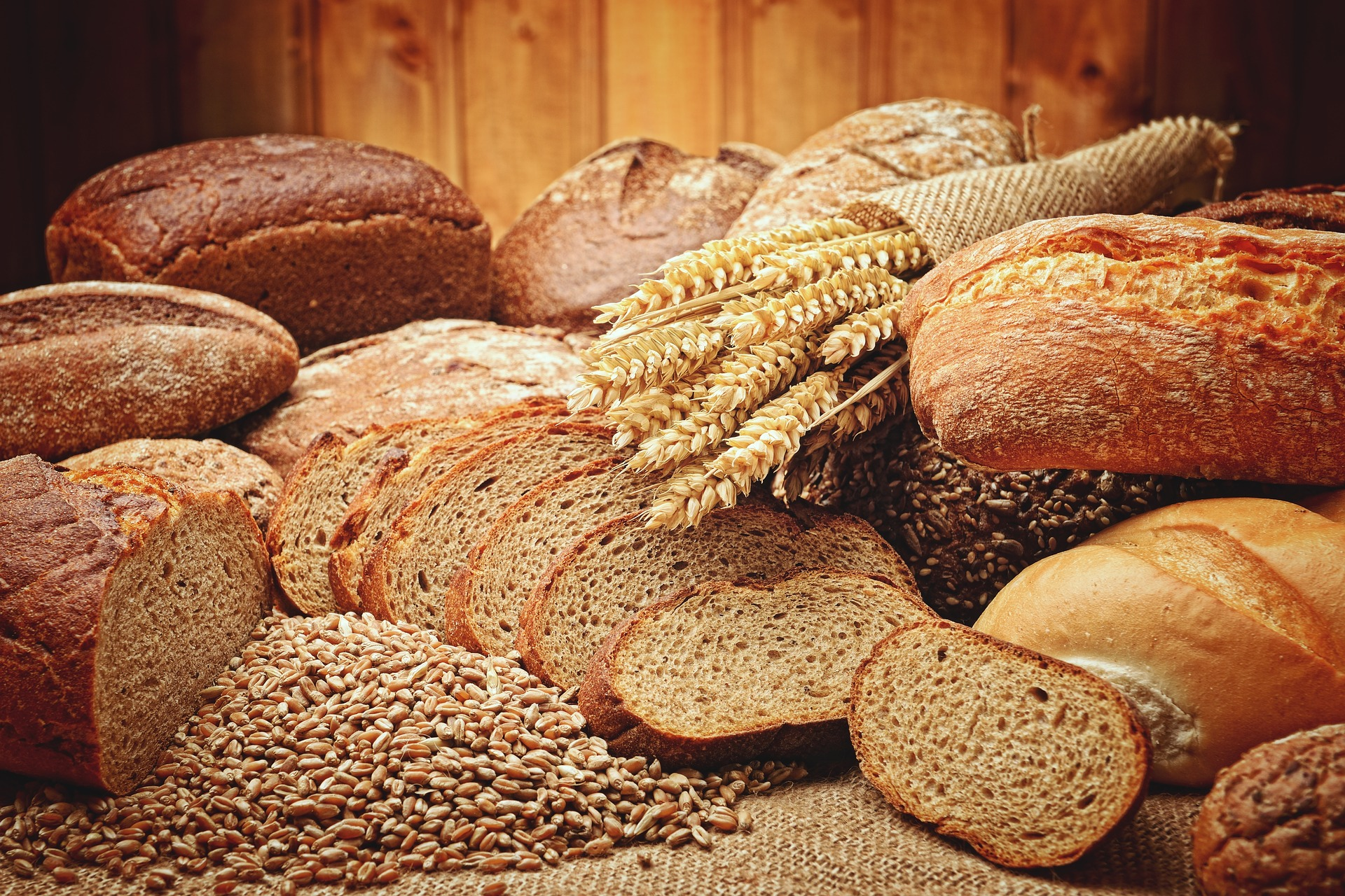Carb Confusion Part 1: The Role of Carbohydrate in Pet Foods