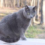 cat-1275101_1920