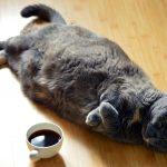 cat-1351612_1920