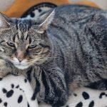 cat-3021725_1280