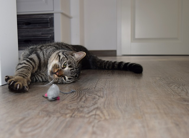 Puzzle Feeders for Cats: Dogs Shouldn't Have All the Fun!
