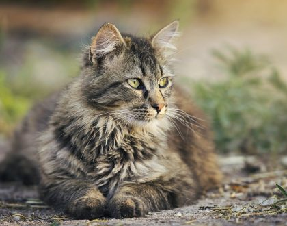 "Research Review: Comparing ""senior"" and ""adult"" cat diets"