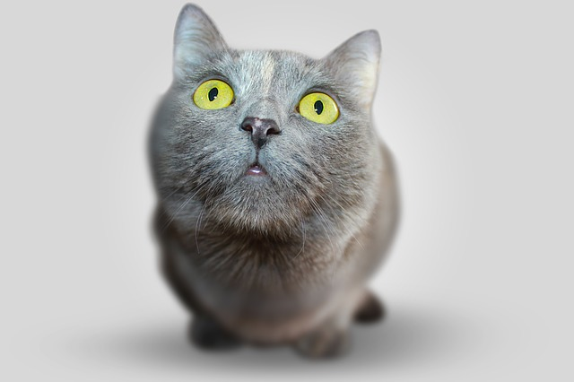 Research Update: New insight into grain-free cat diets