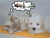 cat and dog exotic dreams