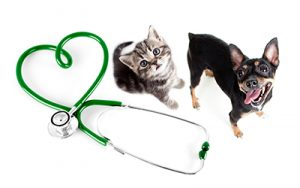 kitten puppy and stethoscope