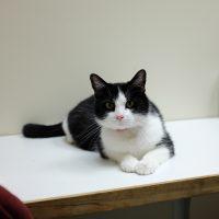 Cat in exam room
