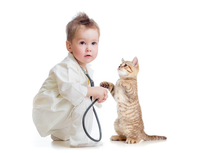 Child playing doctor with kitten