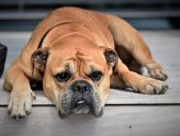 dog-2437110_640