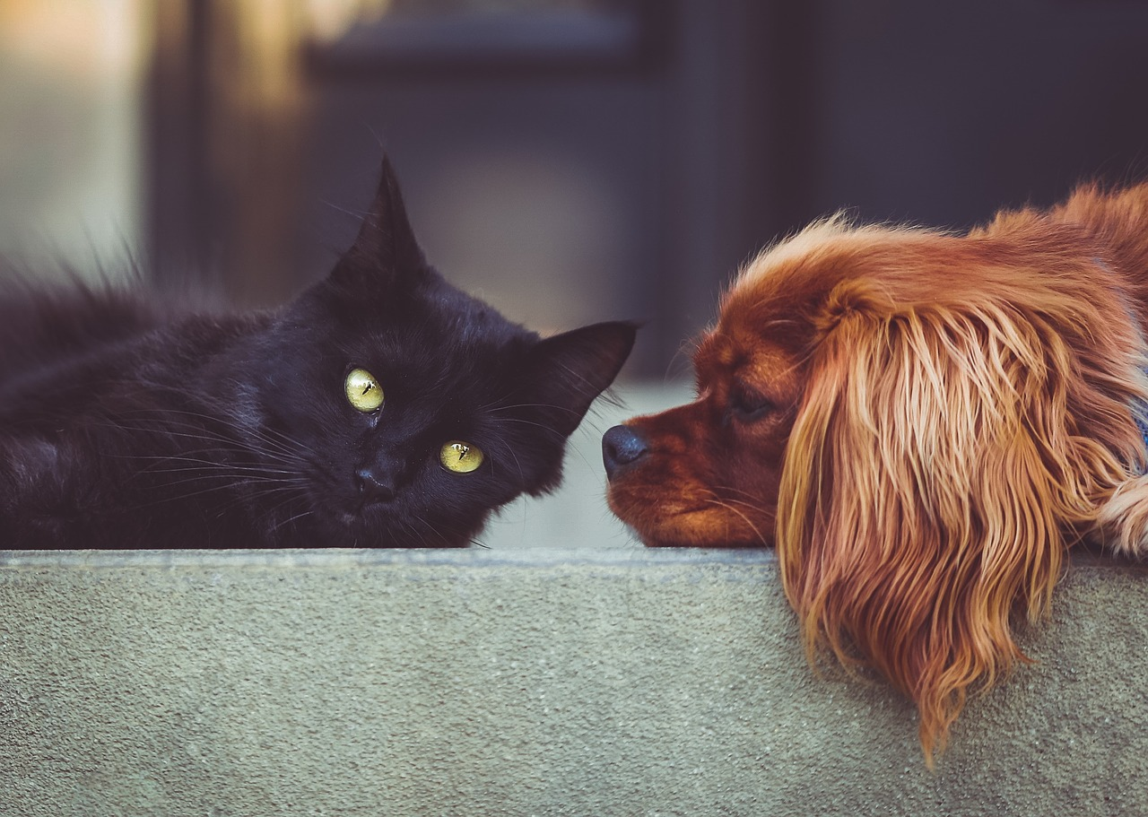 Human Grade: Should pets eat the same food that we do?
