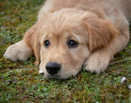 Pondering Pet Protein: How much protein should my pet get?