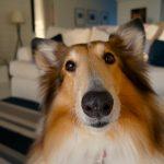 dog-705820_1280