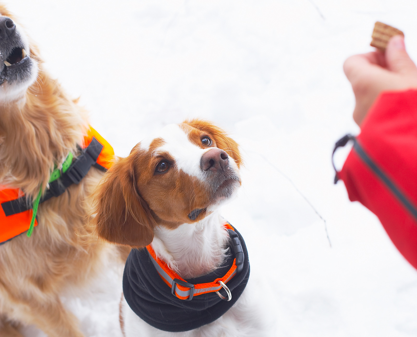 Dogs getting a treat