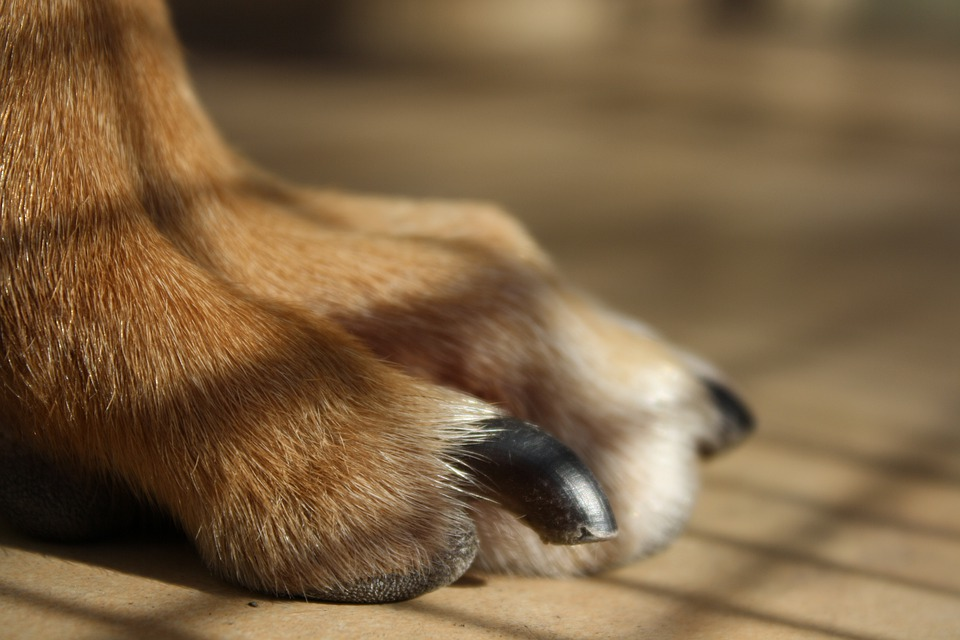 Can I change my pet's diet to improve skin and coat health?