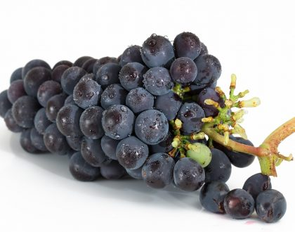 'In the News': Updates on Grape Toxicity