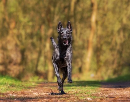 Research Review: A Simple Step for Extending Your Dog's Life