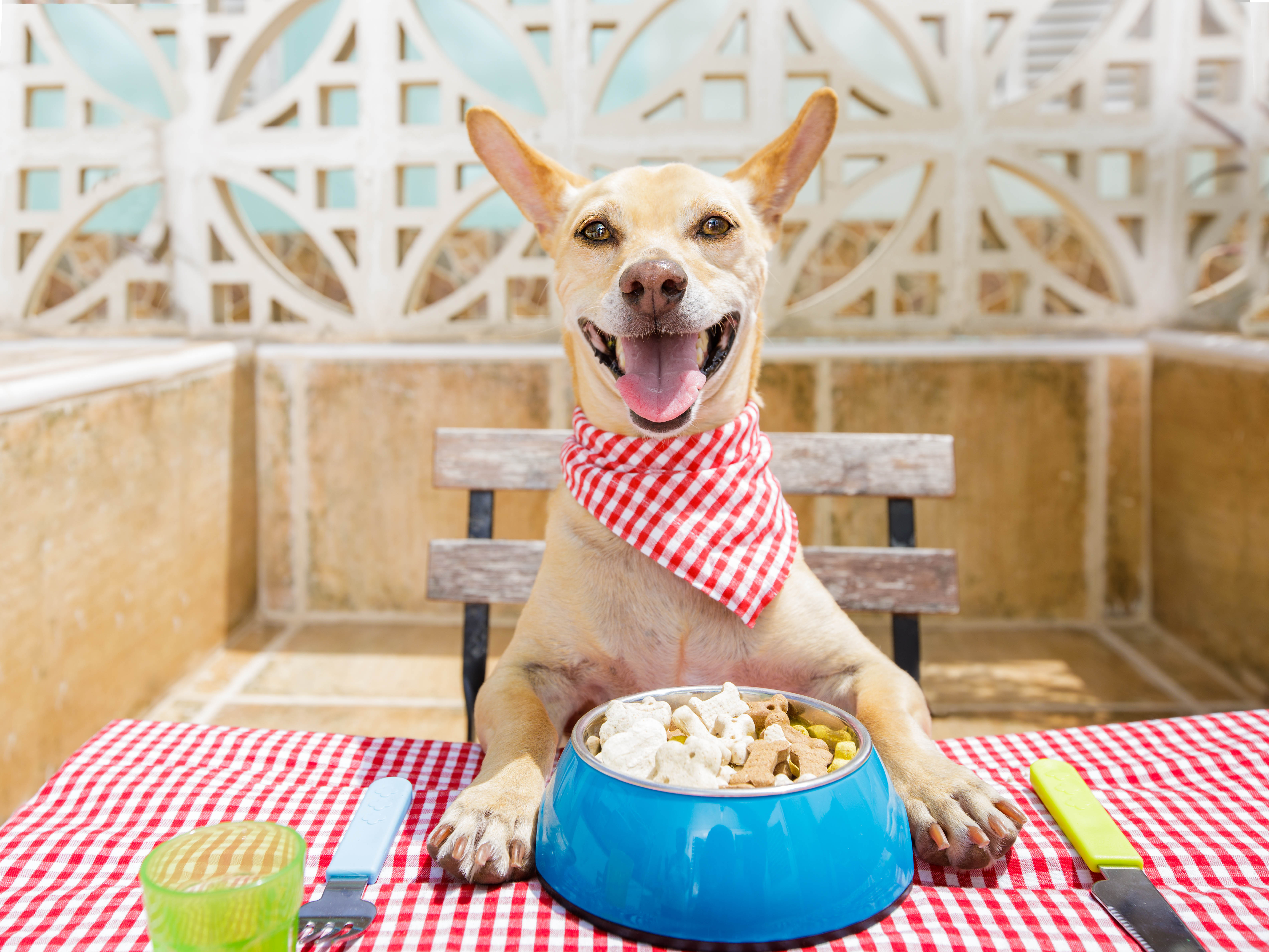 Feeding Frenzy: How Accurate Are Your Pet Food's Feeding Directions?