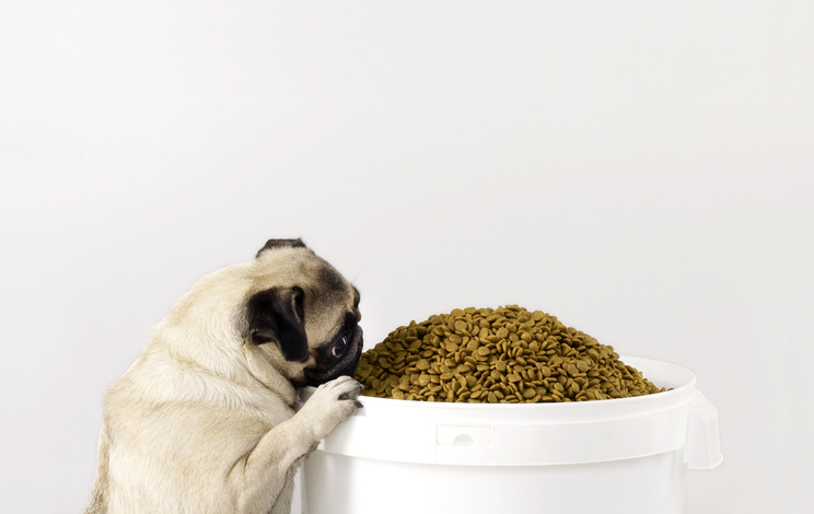 The Scoop on Storing Pet Food