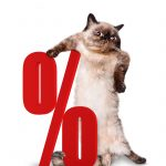 Cat with percent sign