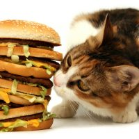 Cat with people food