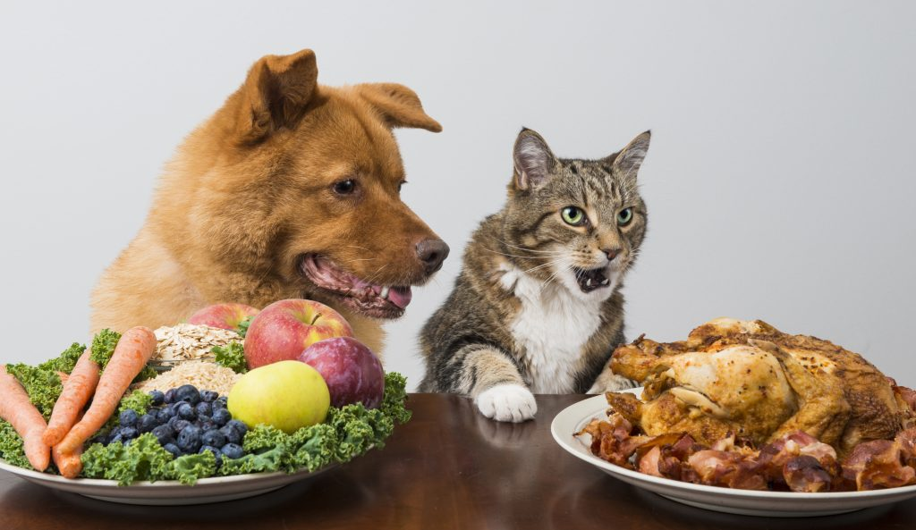 Dog and cat choosing between veggies and meat