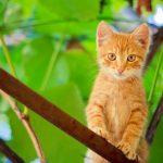 Kitten on branch