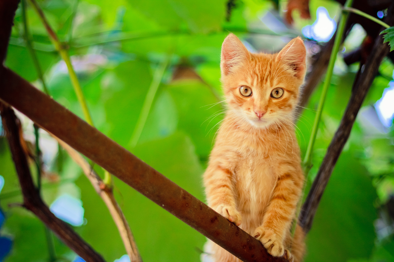 Kitten on branch