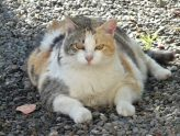 lucky-cat-1196761_1920