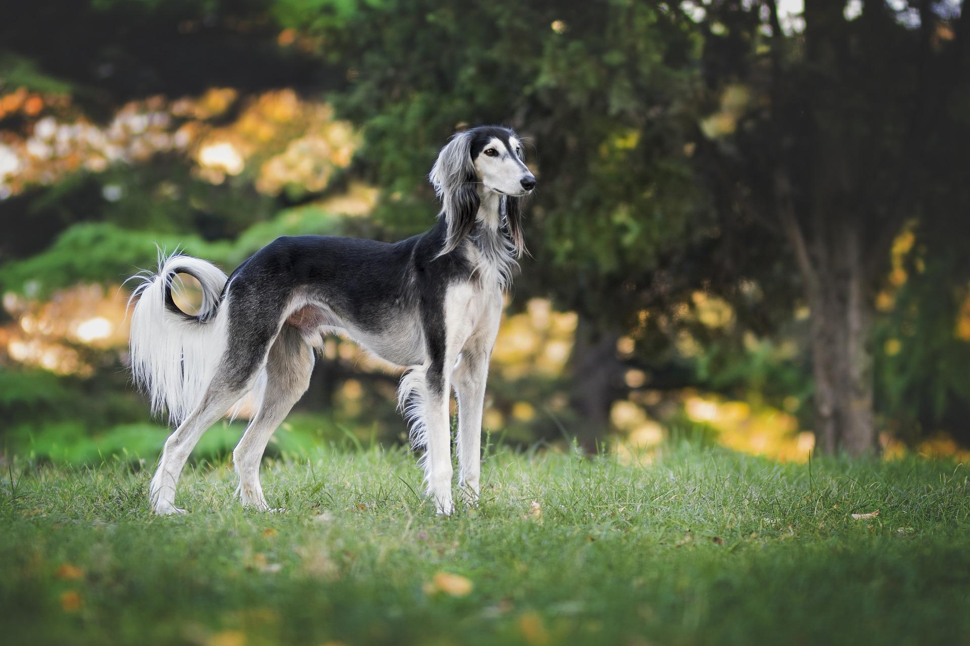A big pawprint: The environmental impact of pet food