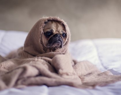 Stomaching the Problem: Could Your Pet Have Bilious Vomiting Syndrome?